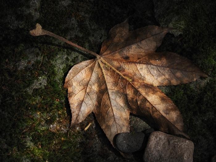 今年も始めます「落ち葉の美学」_f0224100_13312705.jpg
