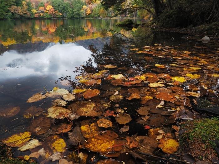 今年も始めます「落ち葉の美学」_f0224100_13314251.jpg