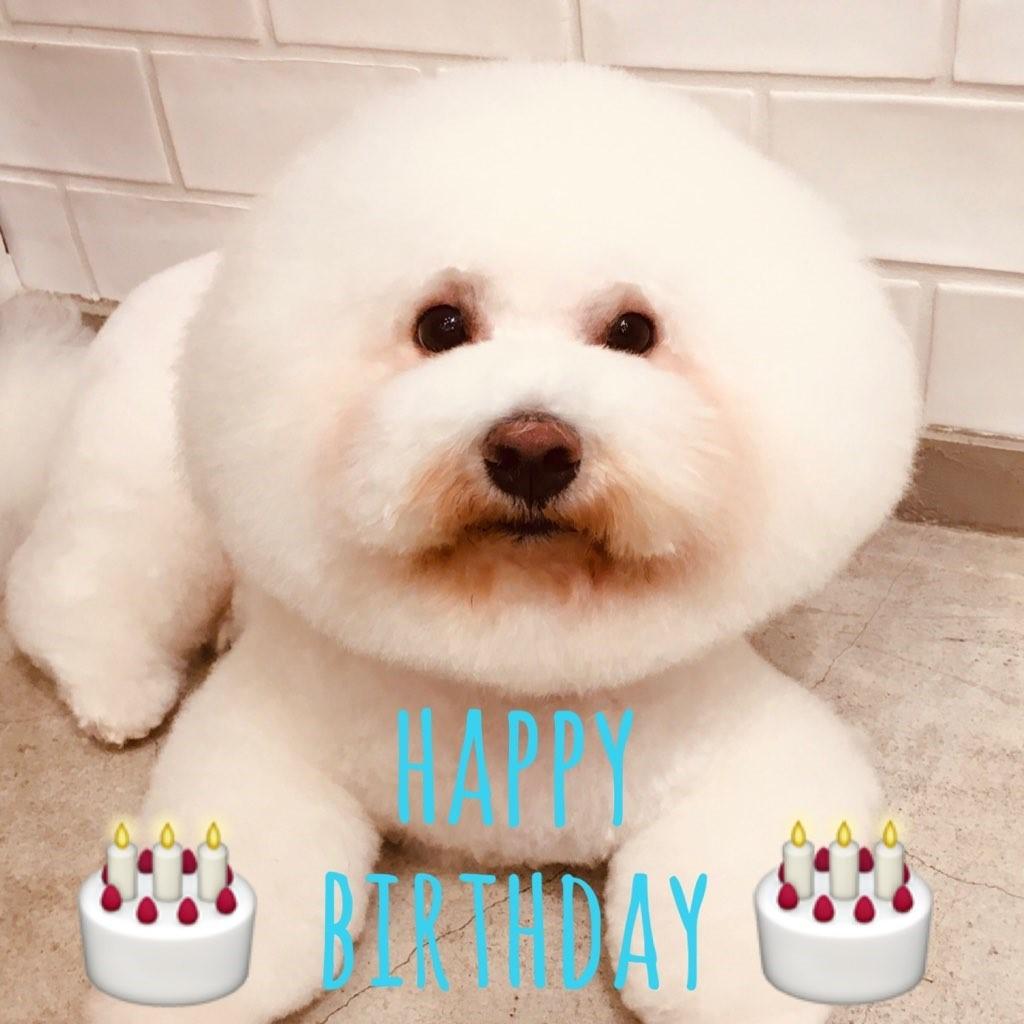 ☆ Happy Birthday ・ むさしくん ☆_d0060413_09292188.jpg