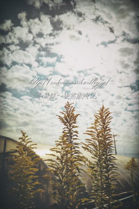 背高泡立草が咲く頃。_f0235723_19430364.jpg