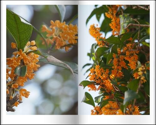 庭の秋_c0026824_10330324.jpg