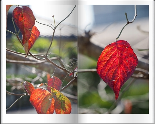庭の秋_c0026824_10331476.jpg