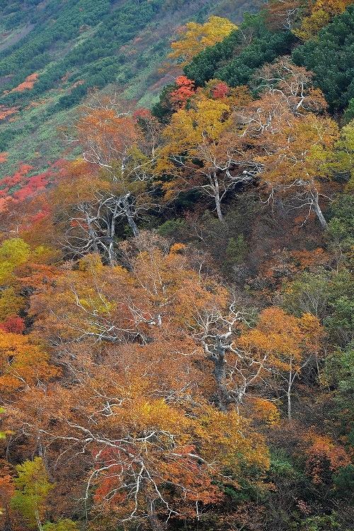 十勝岳温泉②_f0116528_20125783.jpg