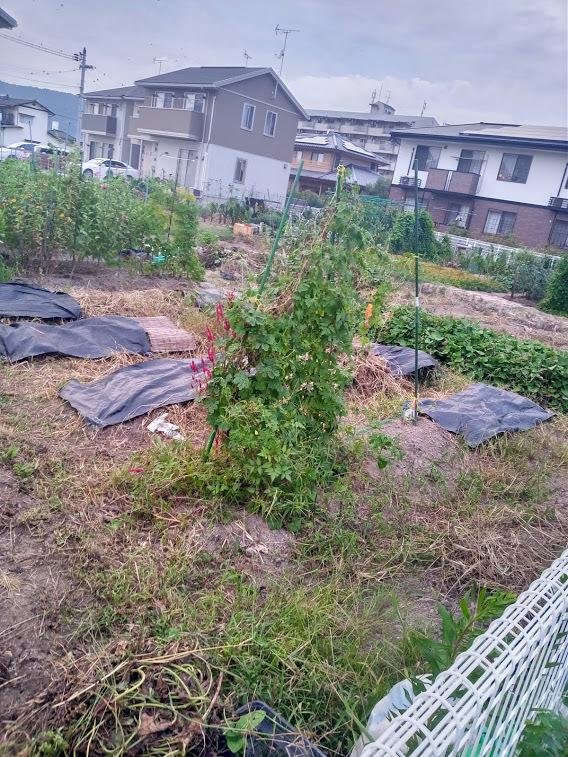家庭菜園 約1年経過_b0211330_22045716.jpg