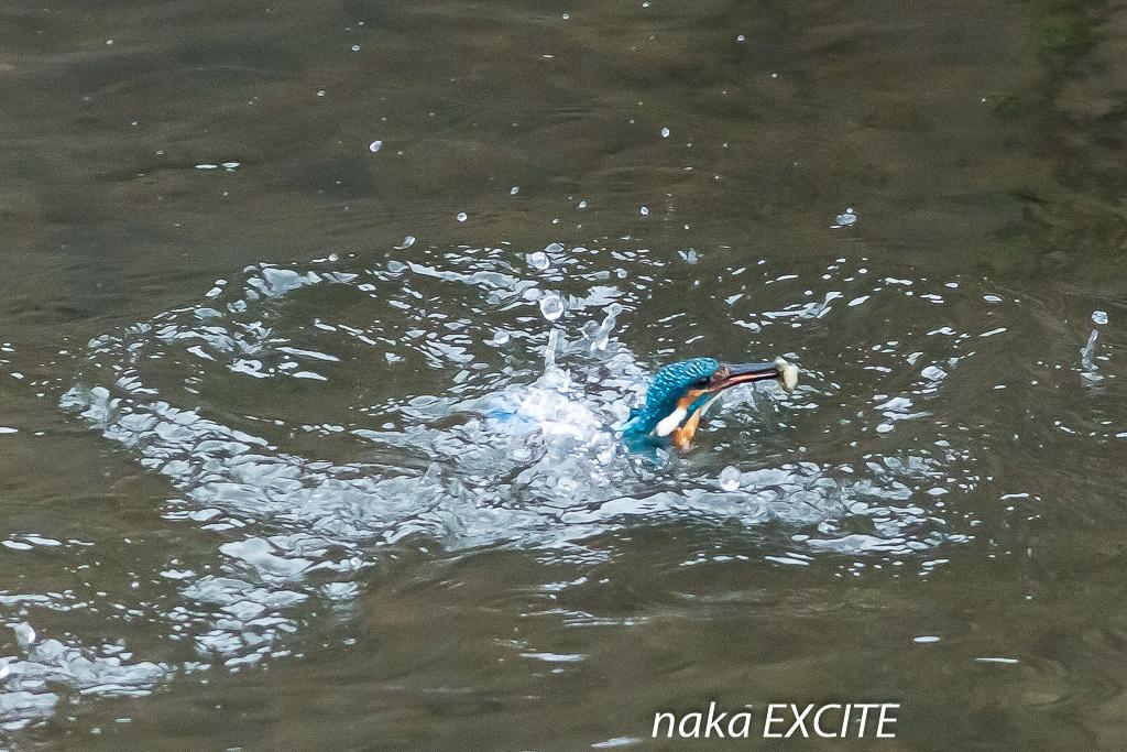 水絡み (2020/10/16 曇り)_f0281533_12240481.jpg