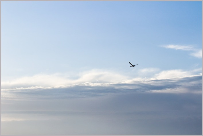 2020年(秋)白鳥4・伊豆沼。_a0123239_12462201.jpg