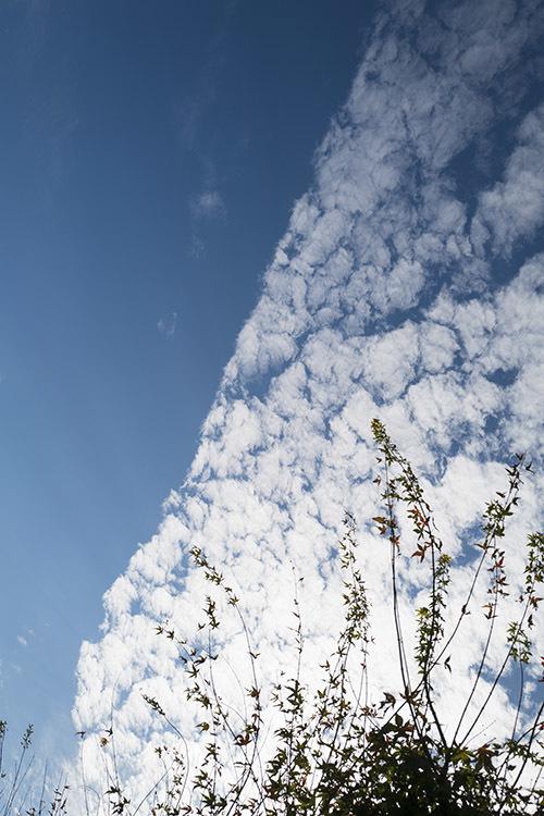 本日曇りのはずが・・・_f0049142_19011374.jpg