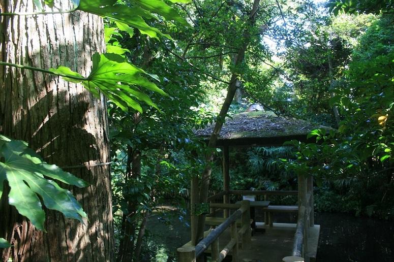 散歩、実篤公園まで_e0082045_16235966.jpg