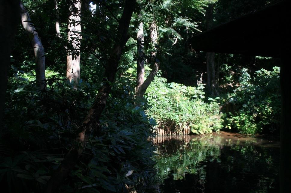 散歩、実篤公園まで_e0082045_16254695.jpg