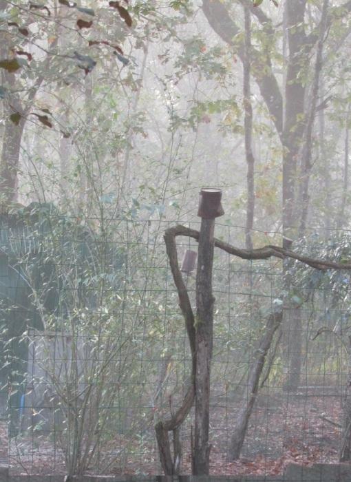 庭で探す ハロウィンのイメージ_b0287748_02145720.jpg
