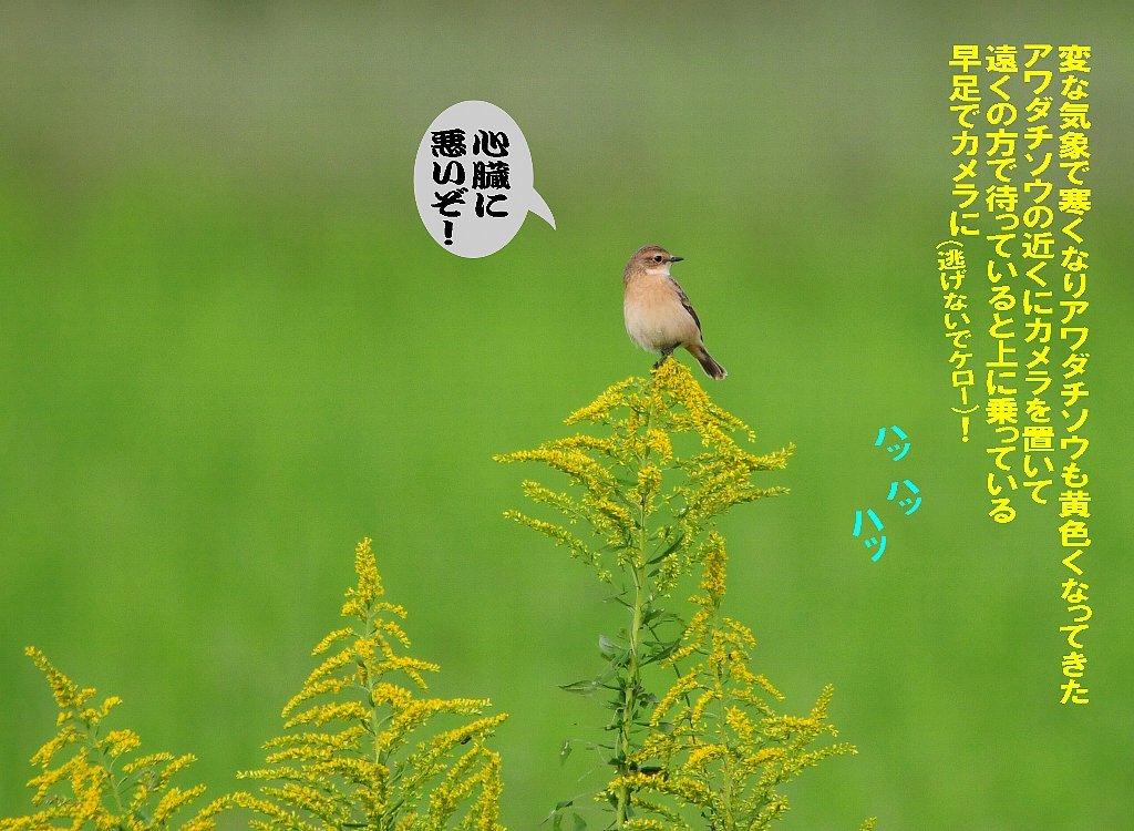北海道は雪が関東は晴れたが風が冷たい!_b0404848_15225092.jpg