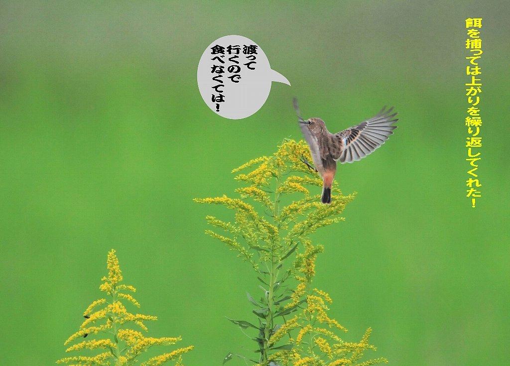 北海道は雪が関東は晴れたが風が冷たい!_b0404848_15225770.jpg