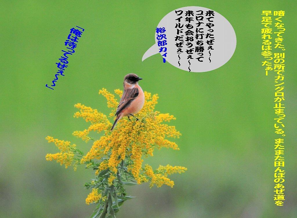 北海道は雪が関東は晴れたが風が冷たい!_b0404848_15231375.jpg