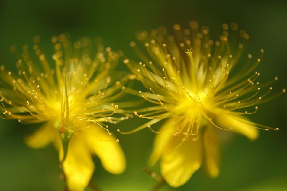 野の花  2020-10-17_e0229455_18124509.jpg