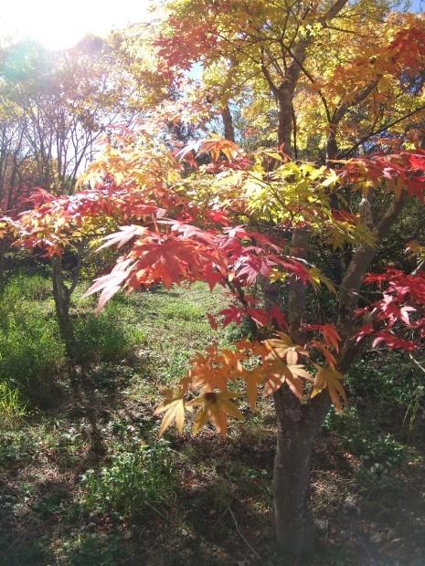 紅葉の季節_f0364455_11284044.jpg