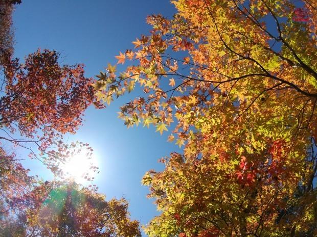 紅葉の季節_f0364455_11284045.jpg