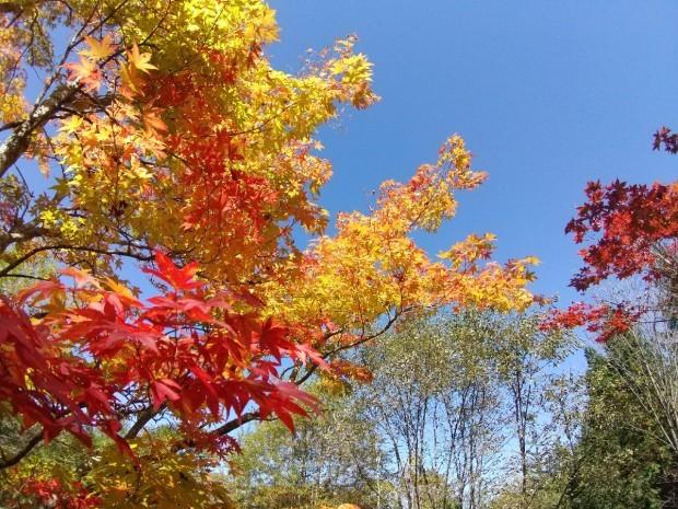 紅葉の季節_f0364455_11284065.jpg
