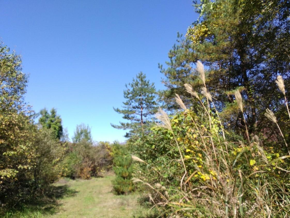 紅葉の季節_f0364455_11284169.jpg