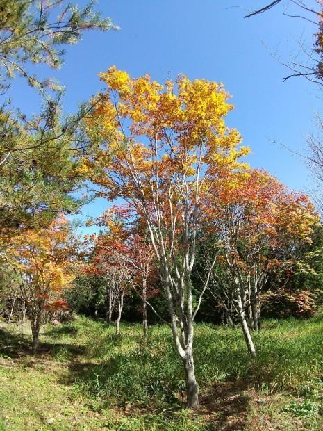 紅葉の季節_f0364455_11284197.jpg