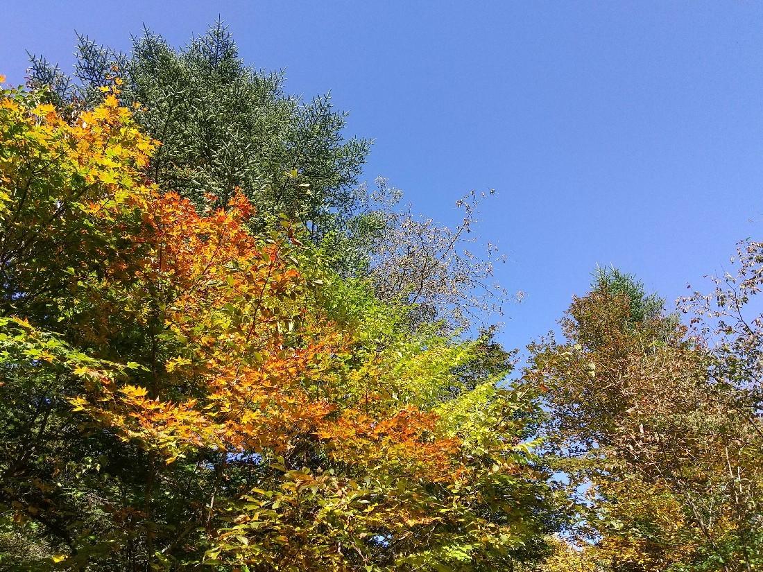 紅葉の季節_f0364455_11292715.jpg