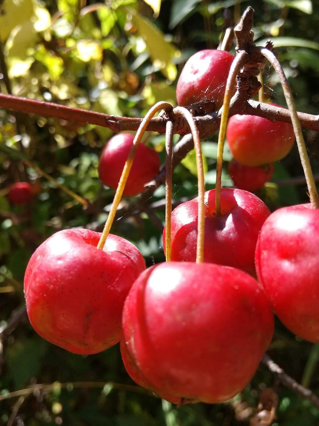 紅葉の季節_f0364455_11314250.jpg