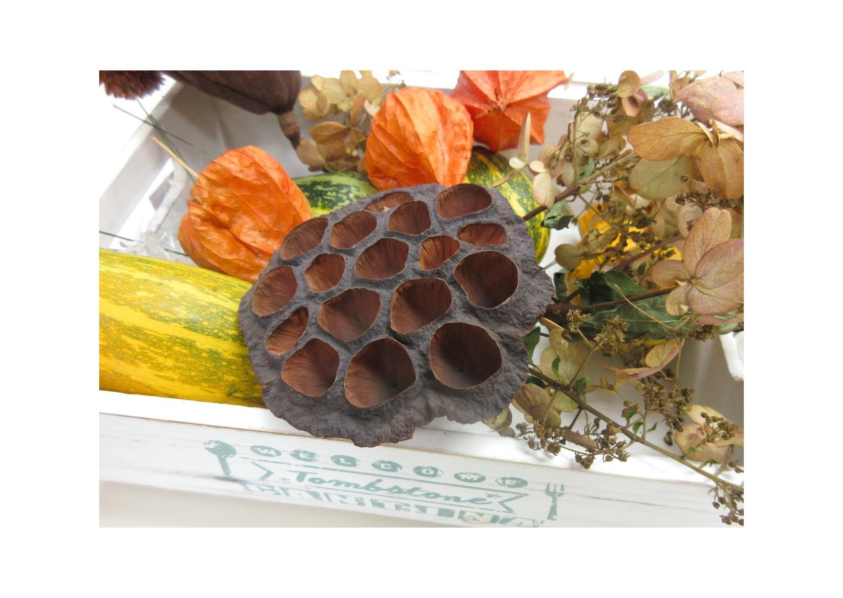 水彩教室「花々を描く」_f0006171_19315304.jpg