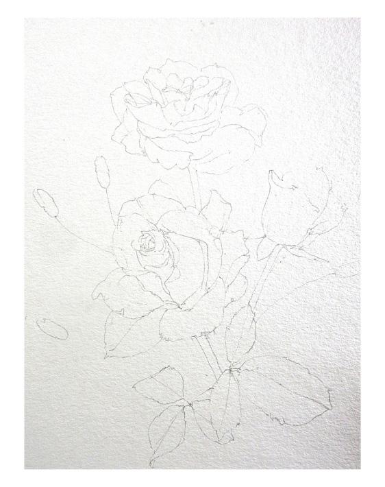 水彩教室「花々を描く」_f0006171_20500178.jpg