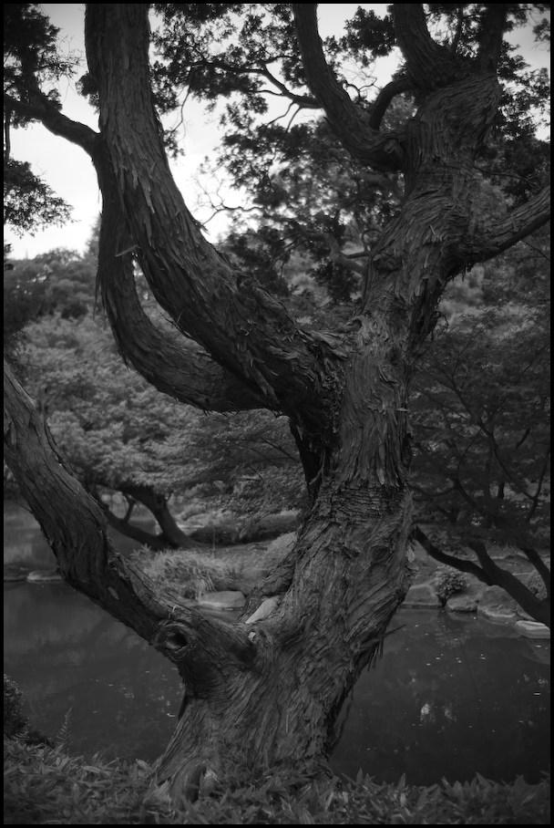 旧古河庭園 -24_b0340572_21512025.jpg