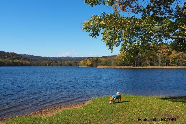 チミケップ湖 2020.10_f0150377_21300362.jpg