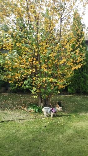 ■落ち葉の季節■_e0123587_00460913.jpg