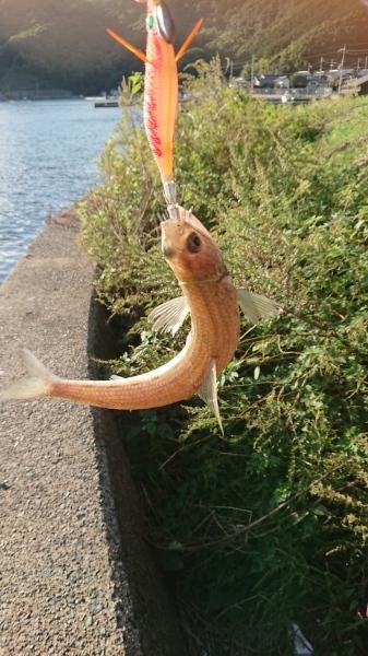 ★ 先週の釣りは…(/ω\) ★ ~ メガネのノハラ イオン洛南店 釣り三昧ブログより TALEX オズニス エギング ~_c0221718_10053214.jpg