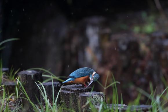 U公園通信 土曜日編 降りしきる雨中戦!_f0396820_16094757.jpg