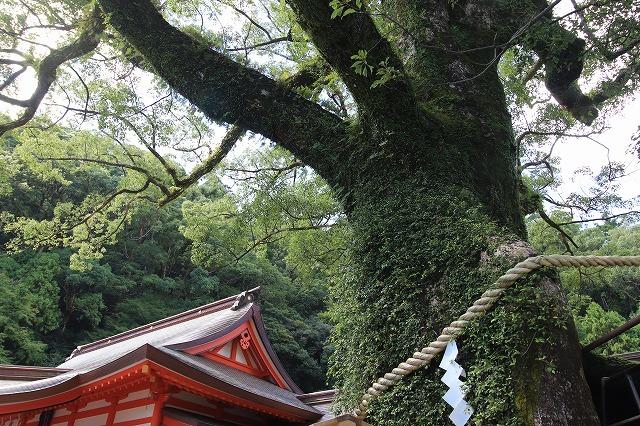 熊野那智大社参詣(撮影:10月11日)_e0321325_15591631.jpg