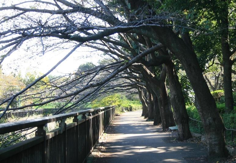 川沿いの 散歩道_e0082045_12445415.jpg