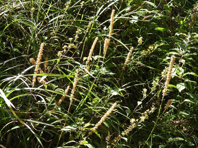 八幡湿原/水口谷湿原_f0214649_08001443.jpg