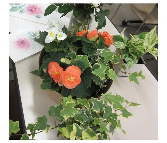 水彩教室「花々を描く」_f0006171_15403904.jpg