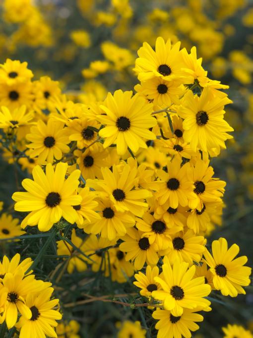 秋の風物詩_d0182179_18092482.jpg