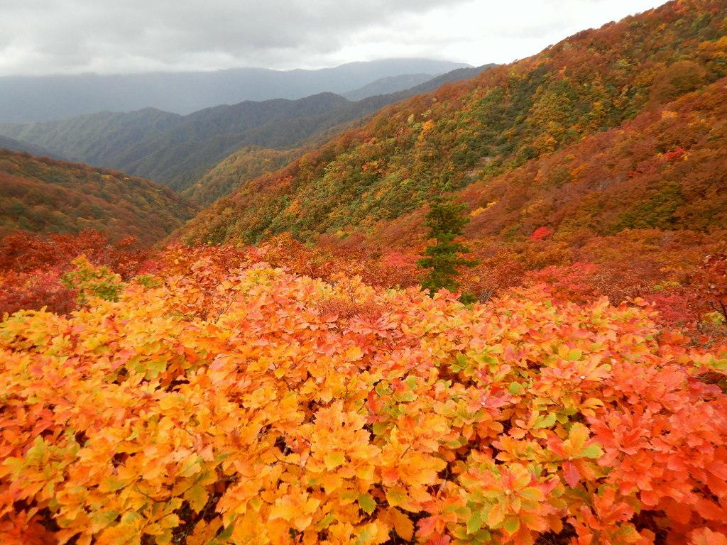 長井葉山・白兎コースから昭和堰の周回 ~ 2020年10月14日_f0170180_12261820.jpg