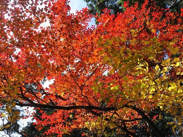 稲村ケ岳で秋を感じて  SOTA#JA/NR-004_f0073587_17570626.jpg