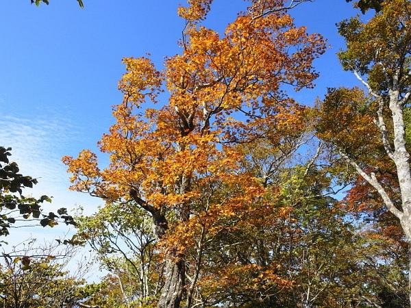 稲村ケ岳で秋を感じて  SOTA#JA/NR-004_f0073587_17582067.jpg
