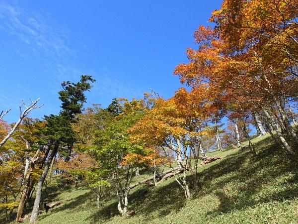 稲村ケ岳で秋を感じて  SOTA#JA/NR-004_f0073587_17582860.jpg
