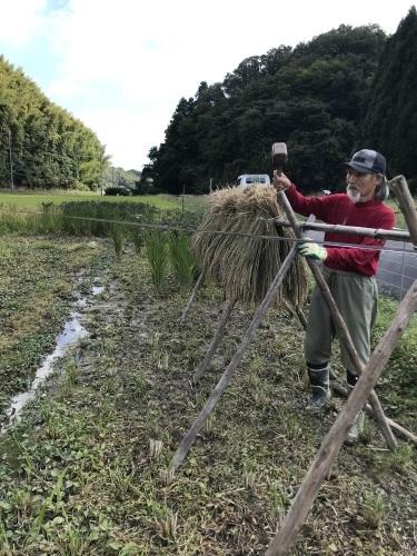 稲刈り    9月5日より始めました_a0189296_10153016.jpeg