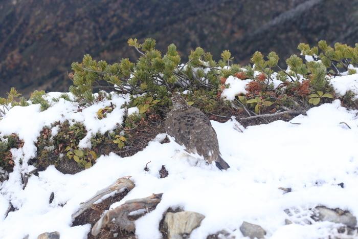 爺ヶ岳 201018 初雪_e0338862_15435081.jpg