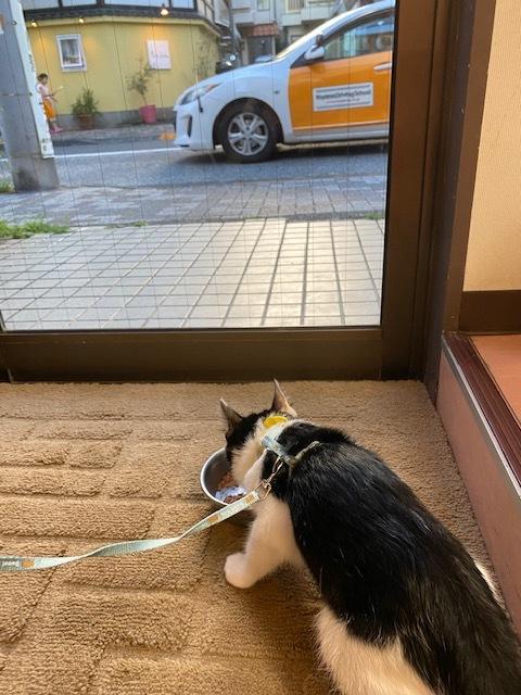 子猫のそらた④_e0367571_16581878.jpg