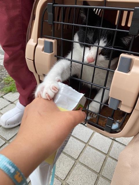 子猫のそらた⑤_e0367571_17204290.jpg