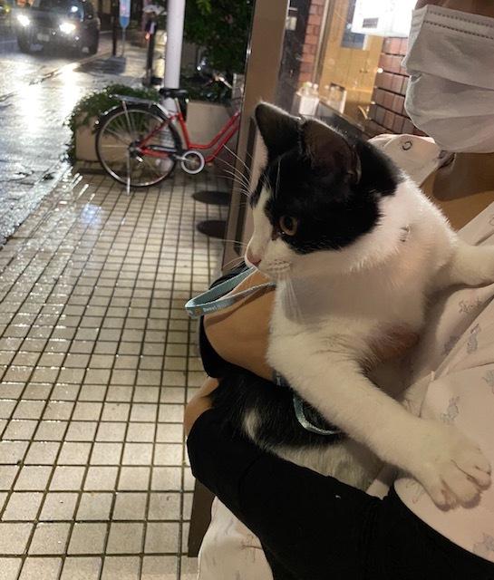 子猫のそらた④_e0367571_18050269.jpg