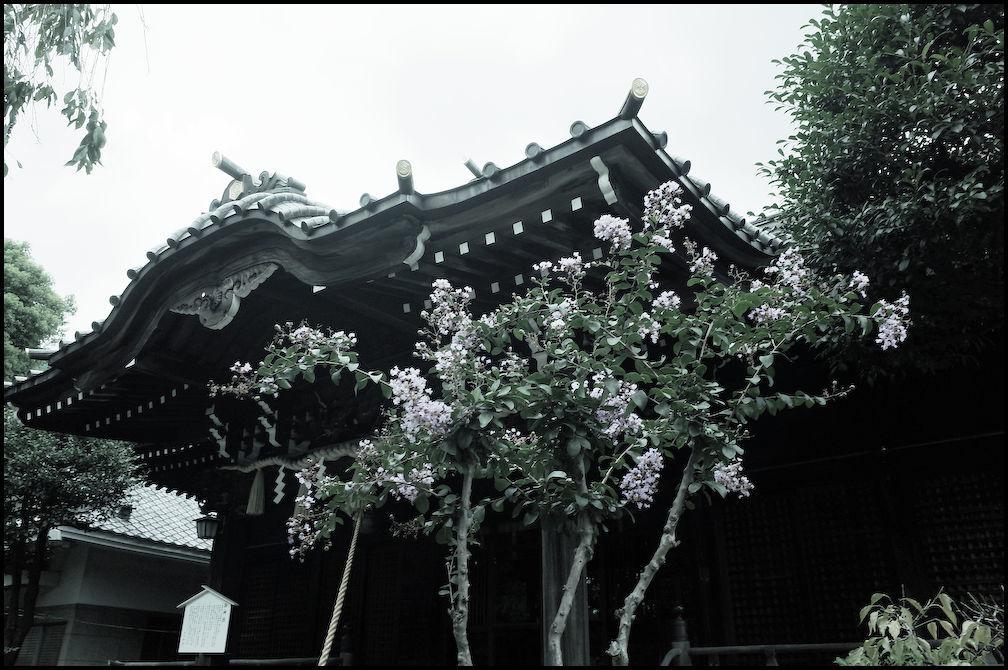 小石川・白山神社 -6_b0340572_21255204.jpg