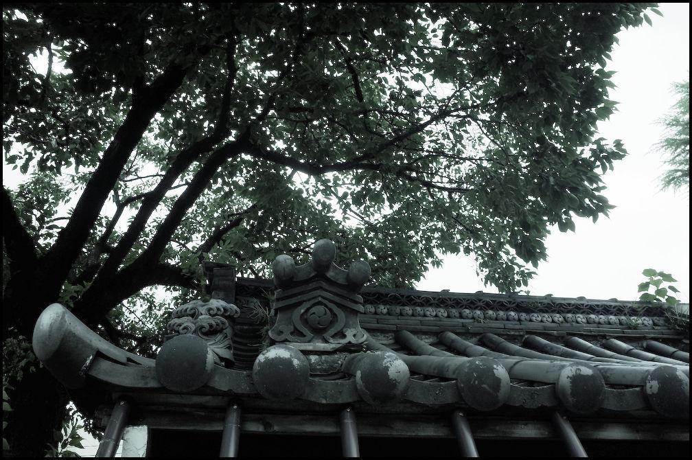 小石川・白山神社 -6_b0340572_21255556.jpg