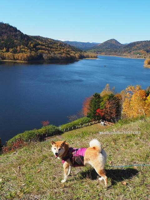 鹿ノ子ダムで紅葉狩り_f0150377_19190378.jpg