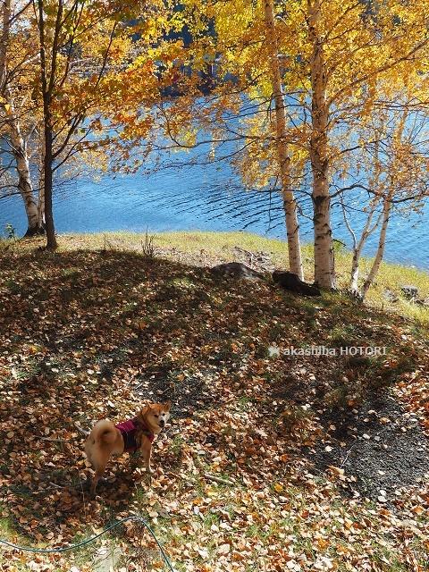 鹿ノ子ダムで紅葉狩り_f0150377_19202149.jpg